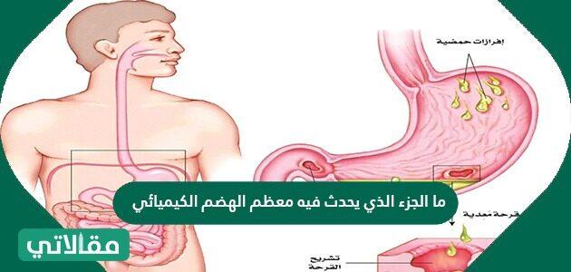 ما الجزء الذي يحدث فيه معظم الهضم الكيميائي