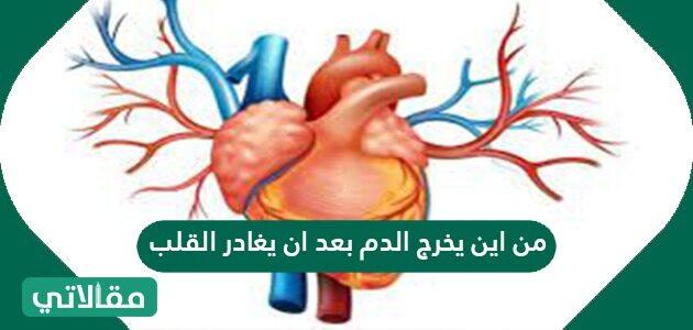 من أين يخرج الدم بعد أن يغادر القلب