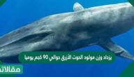 يزداد وزن مولود الحوت الأزرق حوالي ٩٠ كجم يوميا