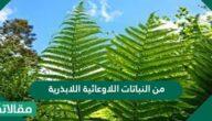 من النباتات اللاوعائية اللابذرية