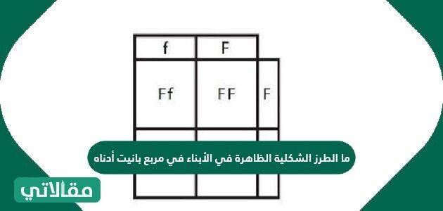 ما الطرز الشكلية الظاهرة في الأبناء في مربع بانيت أدناه