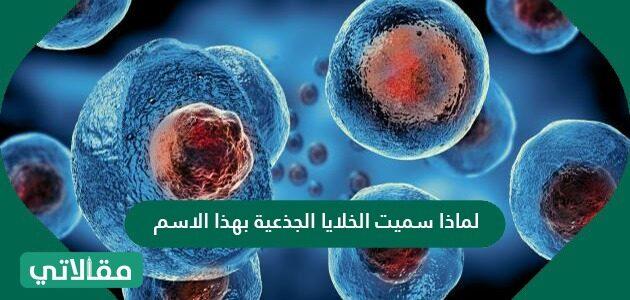 لماذا سميت الخلايا الجذعية بهذا الاسم
