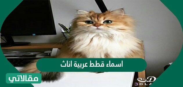اسماء قطط عربية اناث مميزة وجديدة