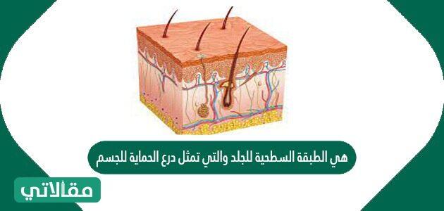 هي الطبقة السطحية للجلد والتي تمثل درع الحماية للجسم