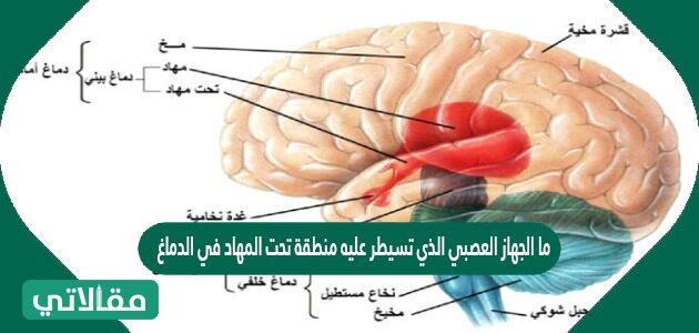 ما الجهاز العصبي الذي تسيطر عليه منطقة تحت المهاد في الدماغ