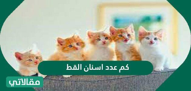 كم عدد أسنان القط