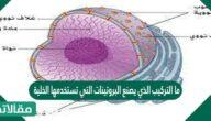 ما التركيب الذي يصنع البروتينات التي تستخدمها الخلية